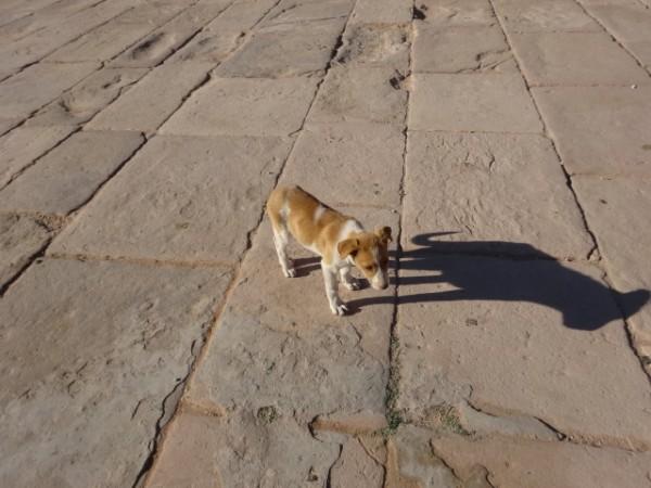 ペトラ遺跡の犬